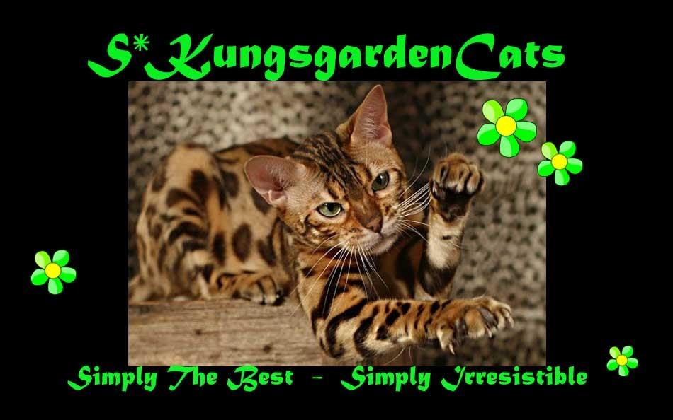 KungsgardenCats, Vardag & Show